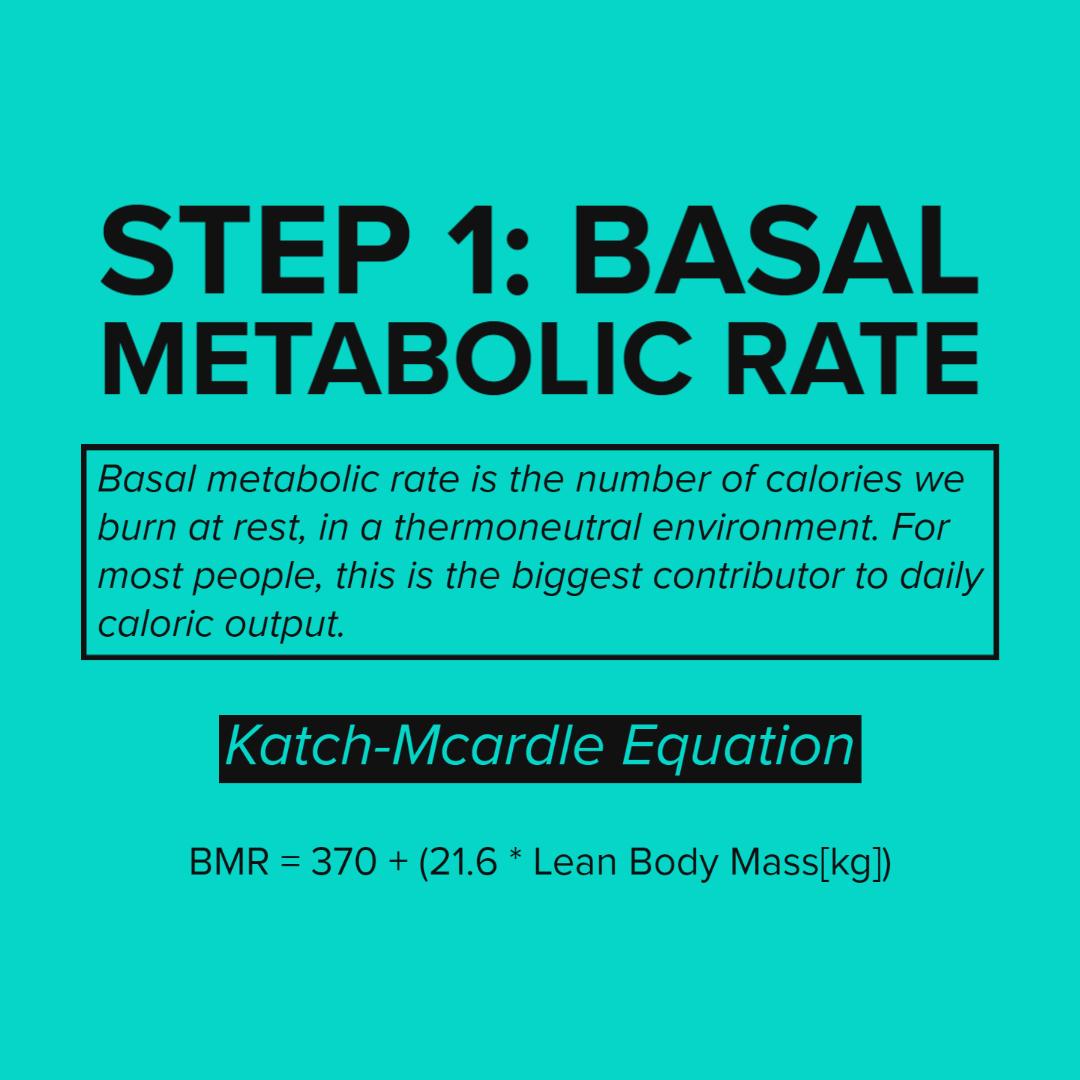 Basal Metaboic rate.jpg